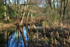 Hinchingbrooke Country Park 6