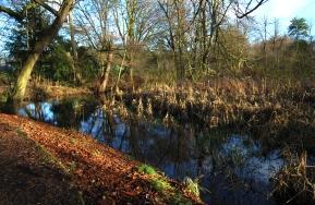 Hinchingbrooke Country Park 3