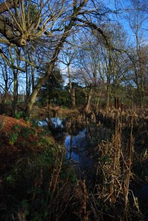 Hinchingbrooke Country Park 4