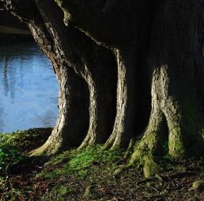 Hinchingbrooke Country Park 8