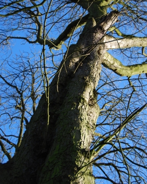 Hinchingbrooke Country Park 5